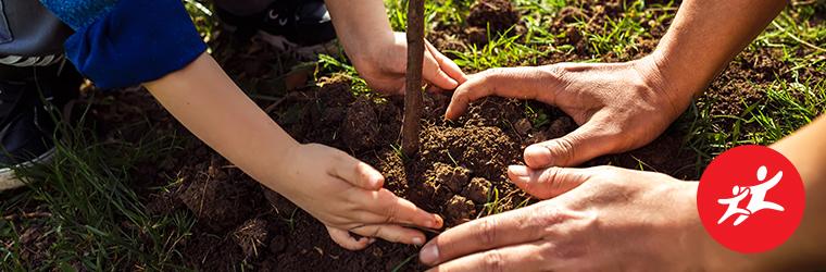Hohes C #viddelanyat fát ültetni